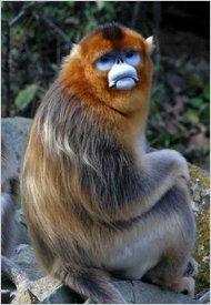Conniff3_monkey-articleInline