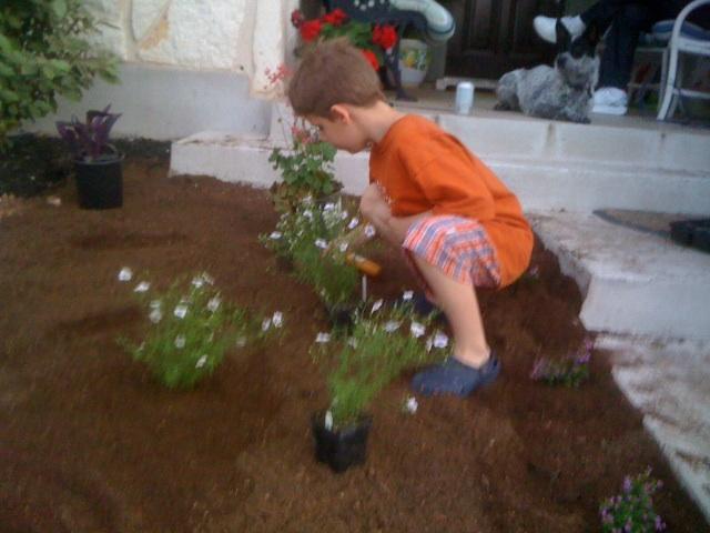 Milo planting