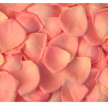Orange-rose-petals